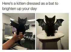 Pictures of the Day – Top 50 Funny Internet Cat Memes - Katzen Cute Animal Memes, Animal Jokes, Cute Funny Animals, Funny Animal Pictures, Funny Cute, Funny Pics, Top Funny, Cute Kittens, Cats And Kittens