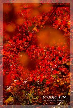 『京都♪東福寺の紅葉』  studio pin