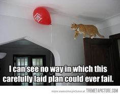 Cat logic always works…
