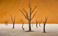 © Patrick Galibert Africatracks