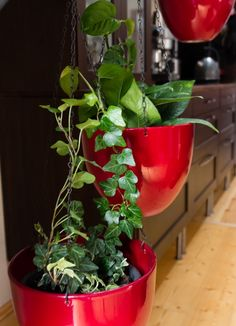 Tips to have your toxic plants - Make sure your hanging pots are sturdy enough to support the weight of the plant. You can also keep tendrils out of reach by making them climb the chain. Toxic Plants For Cats, Cat Safe Plants, Cat Care Tips, Pet Care, Teacup Cats, Cat Health Care, Angora Cats, Youtube Cats, Simple Signs
