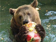 Bear likes ice cream too!