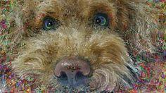 "PCペイントで絵を描きました! Art picture by Seizi.N:   久しぶりに愛犬ティアモの絵を描きました、どアップのティアモも可愛いでしょう、親バカでしょうか?  Kimbra - ""Two Way Street"" LIVE Studio Session http://youtu.be/I134VaHGnDs"