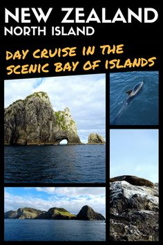 Bay of Islands, New Zealand: Scenic Day Cruise To Spot Dolphins & Seals