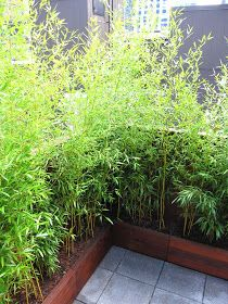 66 Square Feet (Plus): Befores and Afters: New York Roof Garden - Before After DIY Roof Garden Plants, Garden Privacy, Balcony Plants, Small Balcony Design, Small Balcony Garden, Rooftop Garden, Apartment Balcony Garden, Minimalist Garden, Backyard Landscaping