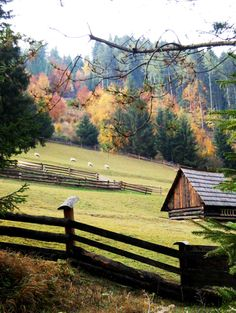 coffee-and-wood:  This is a picture I took this autumn…I love all the colors! My beloved Slovakia<3