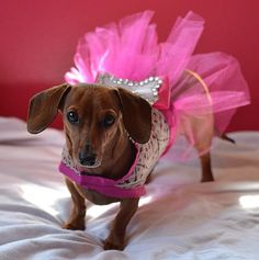 Hey, I found this really awesome Etsy listing at https://www.etsy.com/listing/185338820/pink-princess-pet-dress-anysize