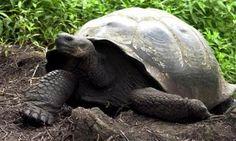 Soppressa tartaruga gigante ultracentenaria in zoo Usa - Virgilio Mobile