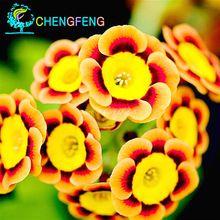 Liesl tricolor Anual de Semillas de Flores de Petunia Raras, Paquete profesional, 100 Semillas/Paquete, flores y Fino Glaseado(China (Mainland))