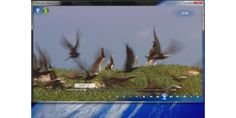 Gratis-Web-TV und coole Plug-Ins für Windows 7