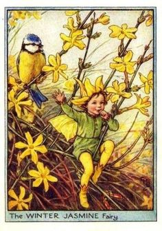 The Winter Jasmine Fairy from Flower Fairies of the Winter. A small boy fairy sits in a jasmine bush with one thumb in his mouth. A blue tit perches in a branch behind him ~ Illustration by Cicely Mary Barker Cicely Mary Barker, Winter Jasmine, Fairy Pictures, Vintage Fairies, Fairytale Art, Flower Fairies, Fairies Garden, Beautiful Fairies, Fantasy Illustration