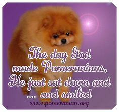 Inquisitive by nature and cute in size, Pomeranians are a true 'toy dog.' Pomeranians are perky and friendly and if you are thinking about getting a puppy Pomeranian Facts, Pomeranian Puppy, Save A Dog, New Neighbors, Getting A Puppy, Lap Dogs, Blue Merle, Waiting For Her, Dry Dog Food