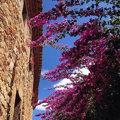 España, Bougainvillea 🇪🇸. . . . .  #spain #europe #bougainvilleas #travelphotography #vacation #instalikes #instafollow #instashare #reizen #reisfotografie