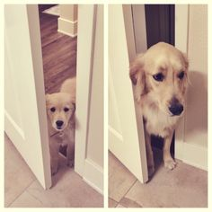 32 dogs recreate photos from their puppyhood.  This is so cute. I should do this with Benny.