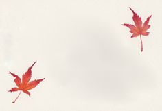 Image result for tiny maple leaf drawing
