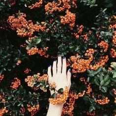 Imagem de orange, flowers, and green Orange Aesthetic, Autumn Aesthetic, Aesthetic Grunge, Green And Orange, Orange Color, Orange Flowers, Yellow, Revolutionary Girl Utena, Orange You Glad