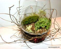 My Wild Lichen and vine woodland forest terrarium!