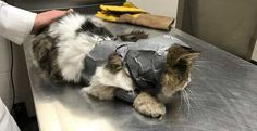 'Duct-taped' Cat Now Recovering in Michigan!