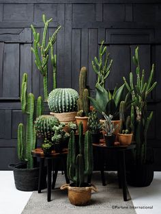 These faux aloe plants are absolutely stunning and extremely lifelike. Standing at over half a metre tall, they come complete with a pot and will look fantastic in your home.Size: Height x Diameter Material: Polyester Cacti And Succulents, Planting Succulents, Cactus Plants, Garden Plants, Indoor Plants, Planting Flowers, Garden Bed, House Plants Decor, Plant Decor