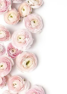 powdery pale pink Ranunculus - these flowers always make me think of super thin fragile paper! /