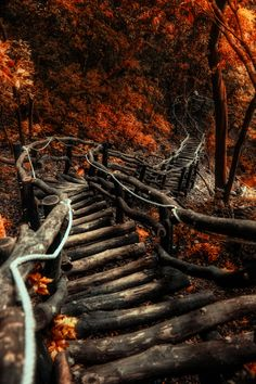 ~~The serpentine path | autumn forest, Taiwan | by Hanson Mao~~