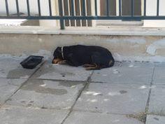 Το σκυλάκι στην εικόνα βρέθηκε χτυπήμενο στη Νίκαια κοντά στο κρατικό νοσοκομείο. Το ψάχνει κανείς?