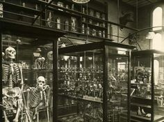 """Discover Alfred Denny Museum in Sheffield, England: Long-secret natural history museum, featuring the skull of a """"Terror Bird. Sheffield City, Sheffield England, Sheffield United, Sources Of Iron, University Of Sheffield, Industrial Development, Natural History Museum, South Yorkshire, Animal Masks"""