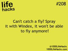 life hacks #208:  Can't catch a fly? Spray it with Windex, it won't be able to fly anymore! 1000LifeHacks.com