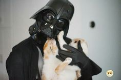 Join dark side, we have kittens