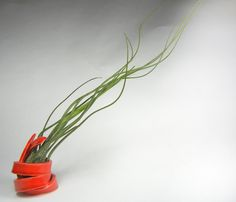 Red Curly Q with Butzii airplant
