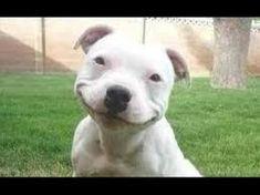 this dog will make you smile https://i.redd.it/1y032h08kj101.jpg