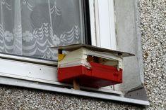 Téli madáretetés | Magyar Madártani és Természetvédelmi Egyesület Wood
