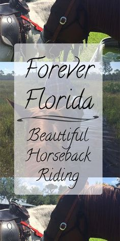 Forever Florida Horseback Riding Adventures and a Linkup Travel With Kids, Family Travel, Forever Florida, Florida Adventures, Sweet Words, Best Places To Travel, Cruise Vacation, European Travel, Horseback Riding