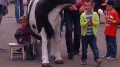 Aby uatrakcyjnić imprezę i zaangażować mieszkańców w różnym wieku, znakomitym sposobem jest przeprowadzenie konkursu na najlepszego dojarza czy najlepszą dojarkę, a sztuczna krowa do dojenia  nadaje się do tego najlepiej. Konkurencja polega na wydojeniu ze sztucznej krowy jak najwięcej mleka w ciągu minuty (taki czas obowiązuje podczas mistrzostw Polski w dojeniu sztucznej krowy). Wydojone mleko jest natychmiast mierzone, a wynik trafia do odpowiednich rankingów.