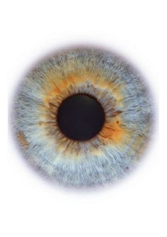 Blog de cursoiridologia : IRIDOLOGIA - CURSO DE IRIDOLOGIA A DISTÂNCIA, ESTUDOS DA ÍRIS -  LINFÁTICA  ÁCIDA