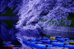 Night Sakura at Chidorigafuchi by Yokai via http://ift.tt/2a7IiJ8