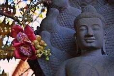 Buddha sculpture and cannonball tree flower close up.  Dimensions: 4000 x 2660px