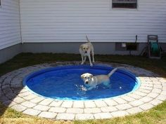 Dog Pond - Place a plastic kiddie pool in the ground. Itd be easy to clean and looks nicer than having it above ground. Big dogs cant chew it up or drag it around.