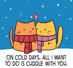Cats n Cuddles