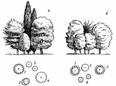 Architecture Concept Drawings, Landscape Architecture, Landscape Design, Plant Sketches, Tree Sketches, Privacy Plants, Garden Design Plans, Copic Sketch, Landscape Plans