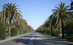 Centra una palma e si ribalta sulla pista ciclabile, paura a San Benedetto #incidente #sanbenedetto #auto