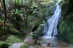 Google Image Result for http://www.southern-edge.com/wp-content/uploads/Abel-Tasman-Walking-Track.jpg