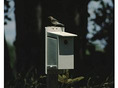 Bluebird Society Bluebird House - Help Protect the North American Bluebird By Providing Them with a Safe and Secure Place to Nest and Rear Their Young. 100% American Made. The Best Bluebird House That Money Can Buy. Also Great for Other Species of Birds. JingaDoodle, LLC http://www.amazon.com/dp/B00RLU5U5M/ref=cm_sw_r_pi_dp_oPoowb07S477B