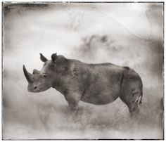 Nick Brandt – The beauty of East Africa in black and white photography | artFido's Blog