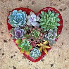 ❤️ by @anamarsh #succulove Succulents In Containers, Cacti And Succulents, Air Plant Terrarium, Terrariums, Plant Projects, Fairy Birthday Party, Girl Scout Crafts, Spring Plants, Planting Roses
