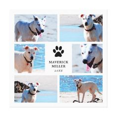 Paw Prints - Dog Photo Collage - chic design idea diy elegant beautiful stylish modern exclusive trendy
