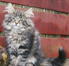 harry forestcat