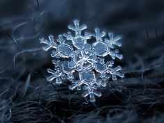 Very cool images of individual snowflakes. More can be found at:  http://www.flickr.com/photos/chaoticmind75/6521870573/in/set-72157626146319517/