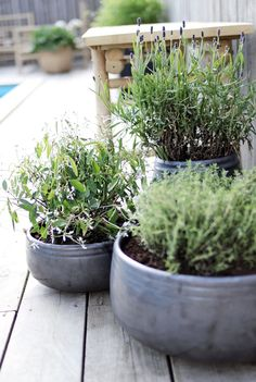 Inspiration for potted gardening.
