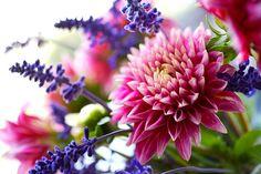 Flowers 33 by evaritchie99, via Flickr